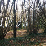 bosque-3