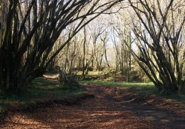 bosque-5